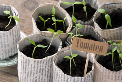 Auch bei der Anzucht von Obst, Gemüse und Kräutern lässt sich Geld sparen