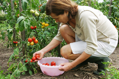 Sparen durch den Eigenanbau von Obst, Gemüse und frischen Kräutern